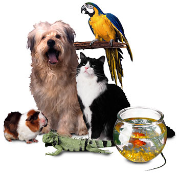 Wootton Petz at Home Top 100 Pet Sites